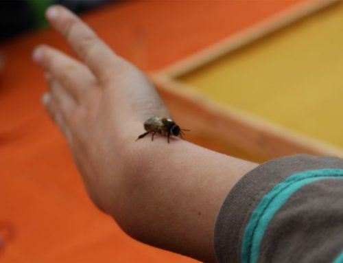14. Mai 2016 – Kleine Bienenforscher
